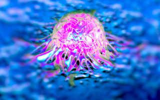 Синтезирована вакцина против опухолей из стволовых клеток