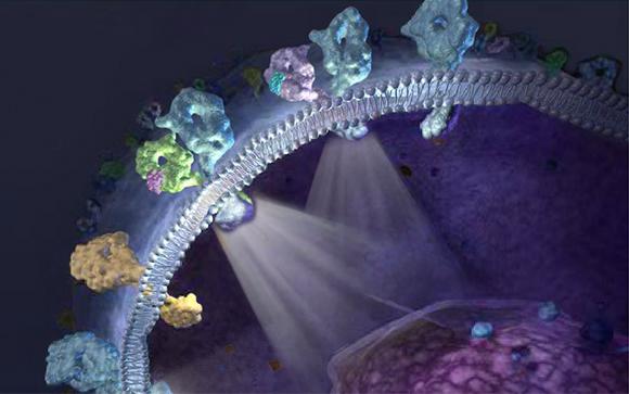 Рецепторы на поверхности мембраны