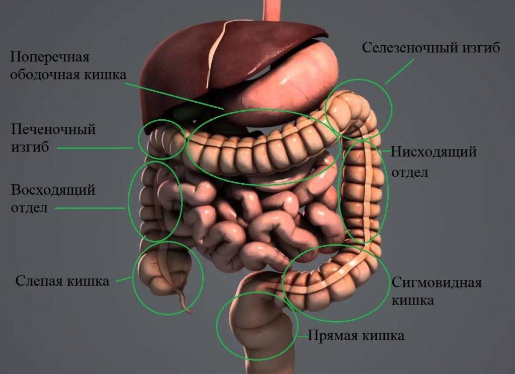 Селезеночный изгиб ободочной кишки симптомы
